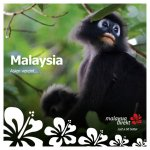 Malaysia direkt Broschüre